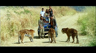 Tiger & Crew